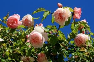 Rosarot an Blau
