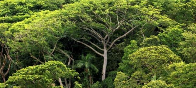 Bäume1-1110x500